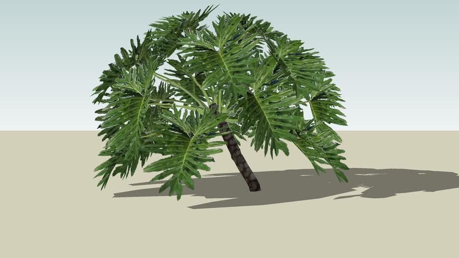 Vegetação - Philodendron
