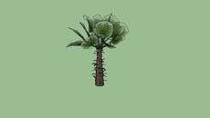Plantas - Pequeno/Médio Porte