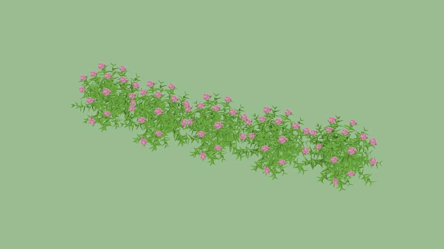 Vegetação florida