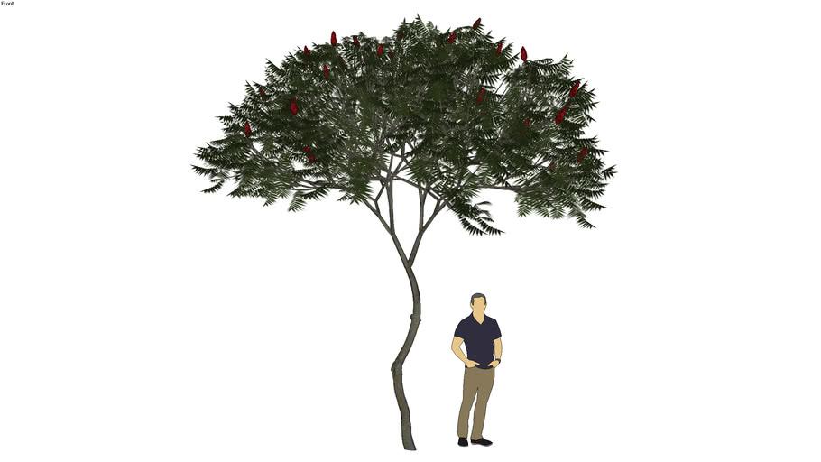 tree - cây