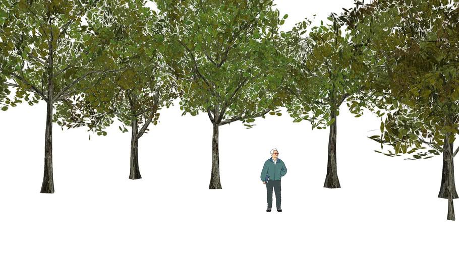 tree 3D ต้นหูกวาง