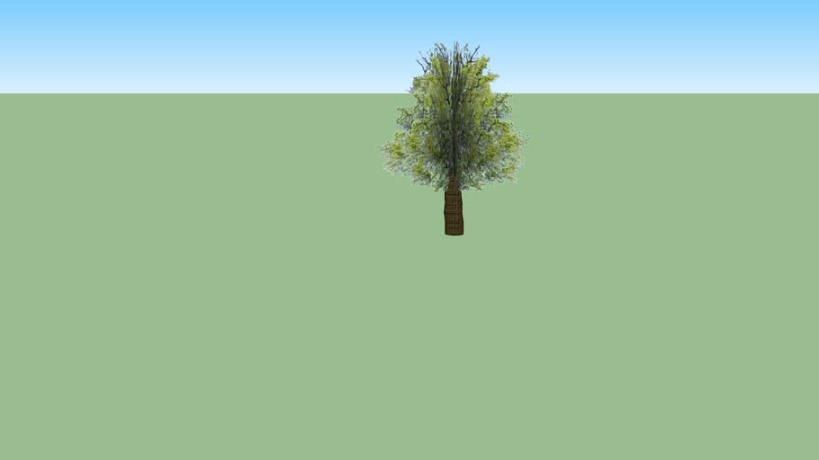 Arbre 1 : Vieux chêne