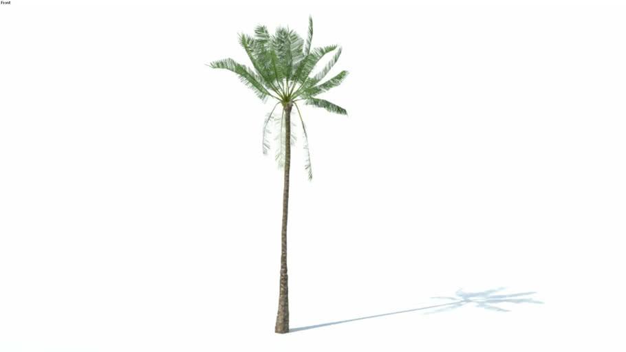 Low poly 3d tree palm (012)