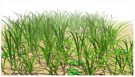 Grass & Plants