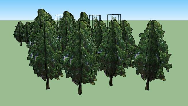 Drzewa Kortowo 33