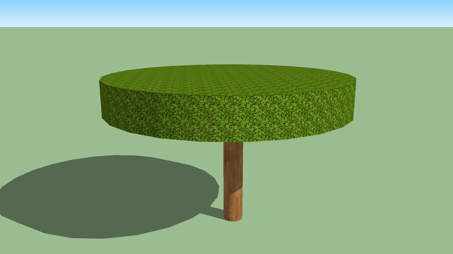 Ficus benjamina circular