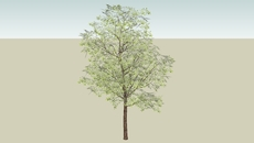 Tree High Poly
