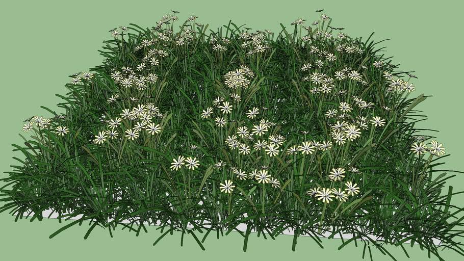 Grass#1