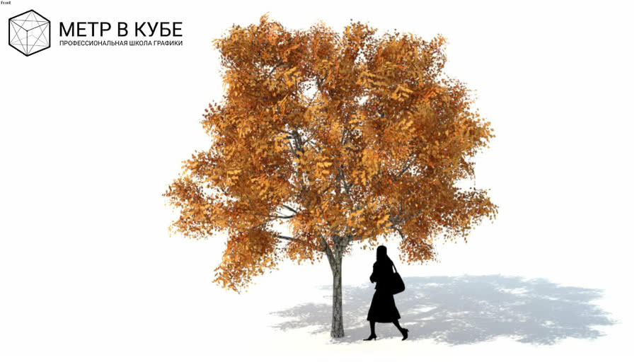 Low poly 3d tree fall autumn (042)