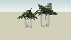 Plantas Vegetacao