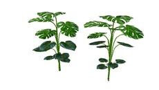 Plantas/Vegetación
