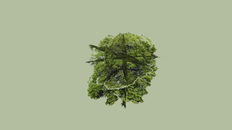 Lime Tree 3D
