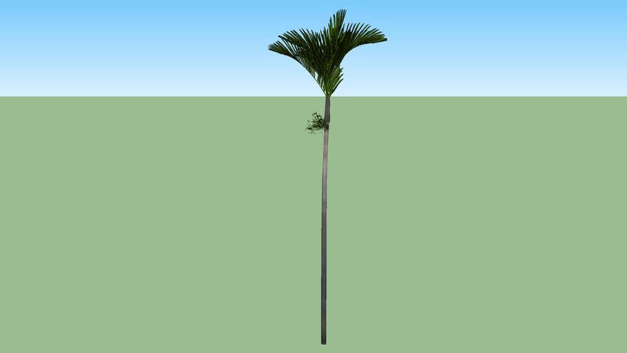 Palm B