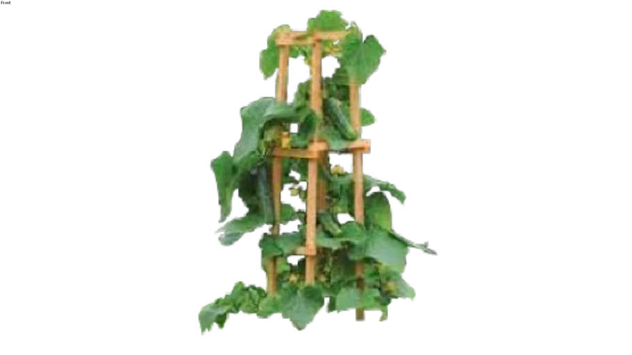 Cucumber plant vegetable