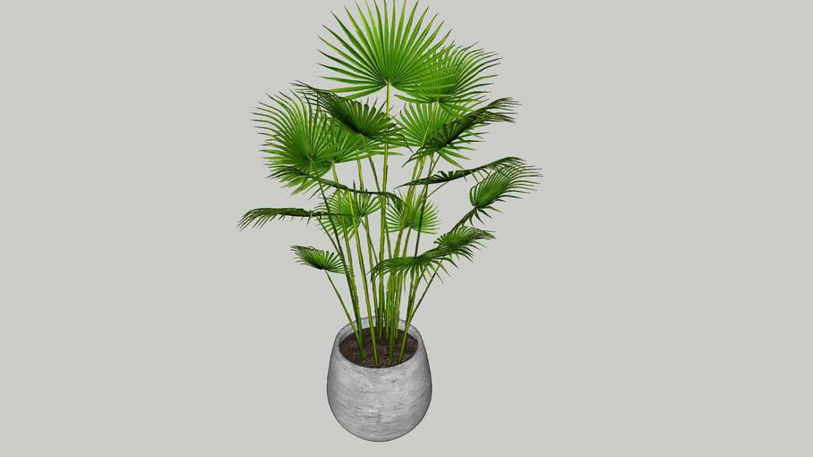 Vegetation 18