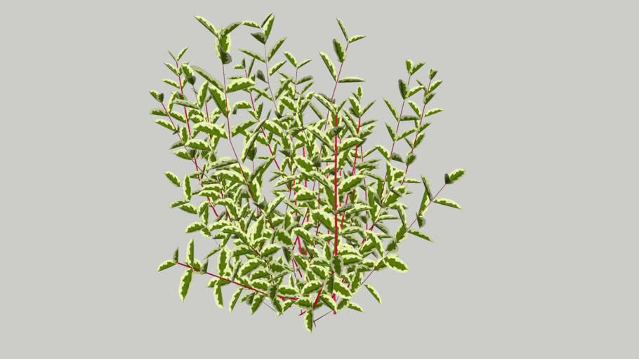 Vegetation 21