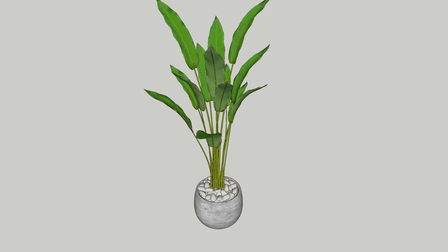 Vegetation 20