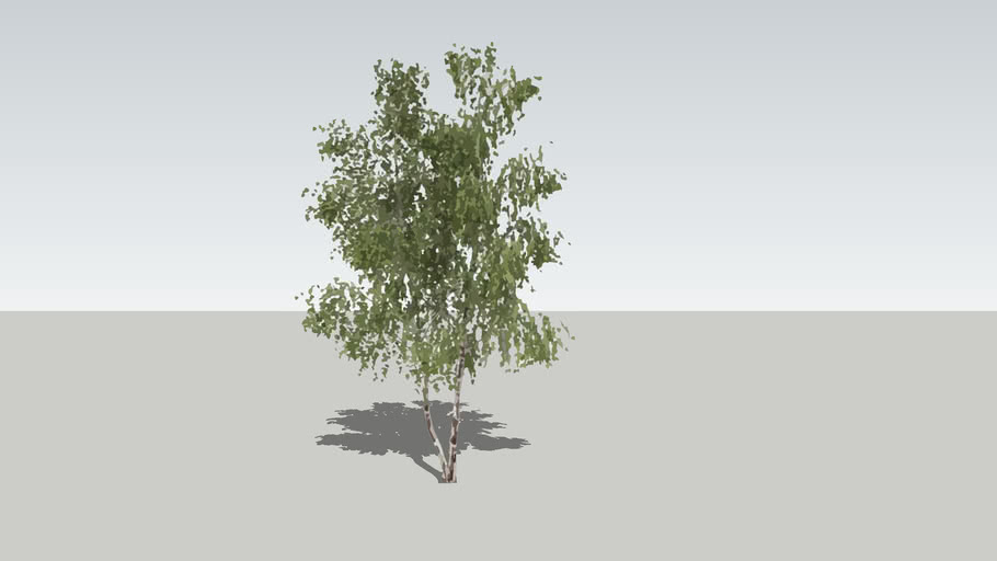 2D Silver Birch [20-foot]