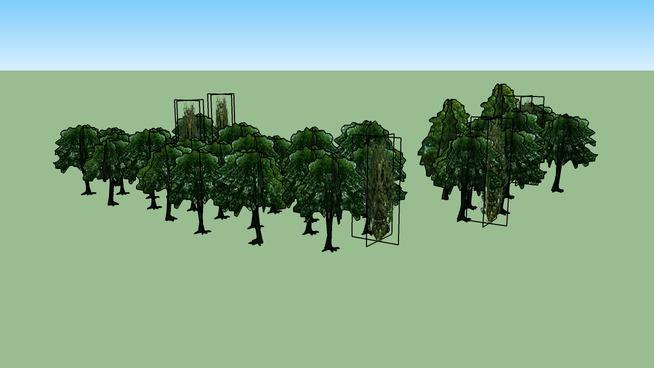 Drzewa Olsztyn 173