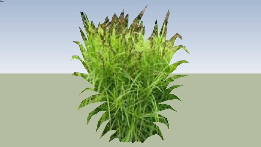 palm sedge grass
