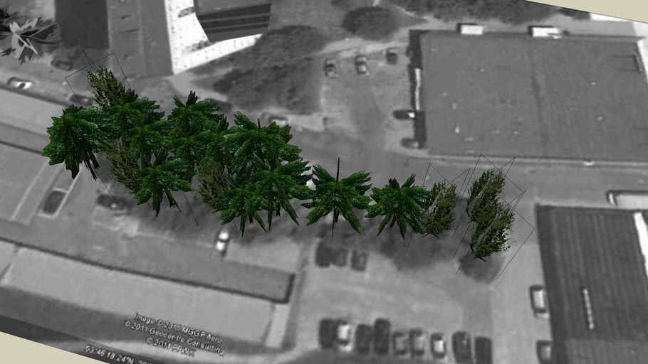 Drzewa Olsztyn 104