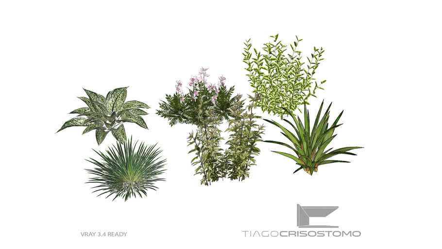 Grupo Arbustos I