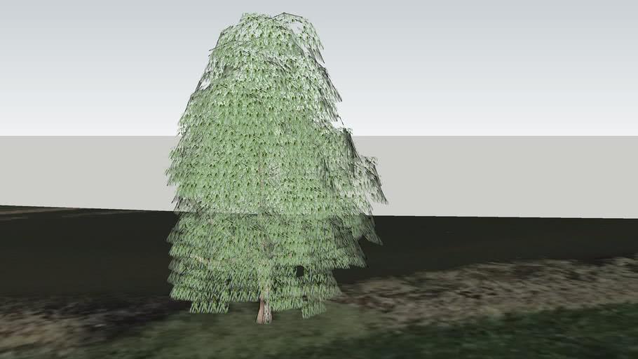 Wilg nummer 1 in boomgaard bij Stille Pieter