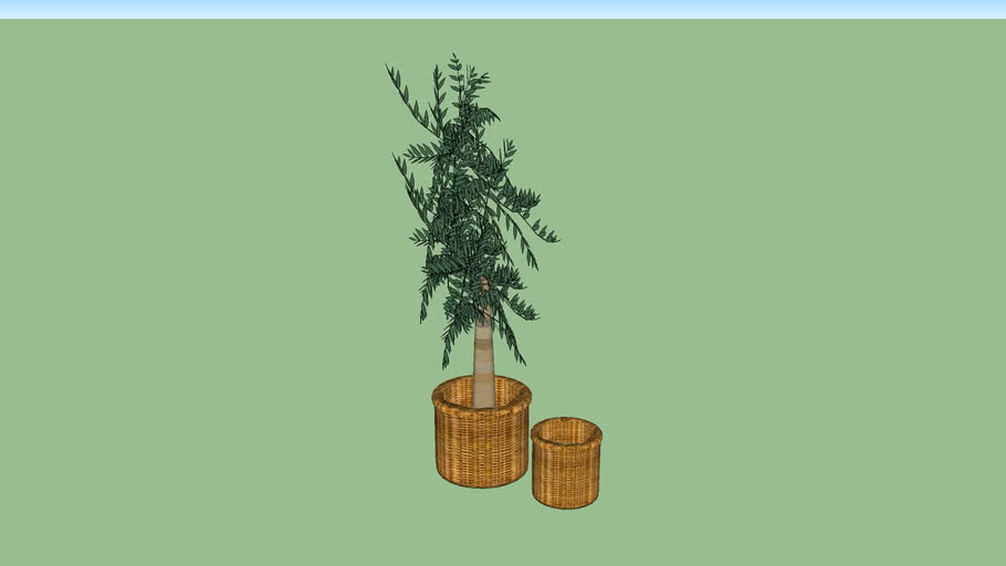 Olivenbaum mit Korb