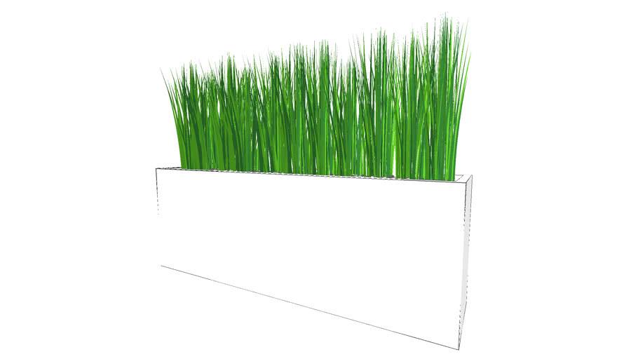 Plantenbak gras