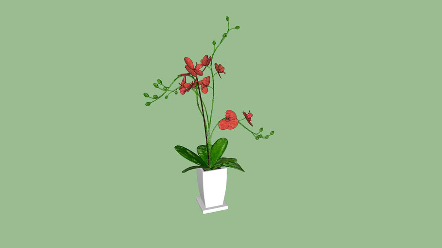 Vaso orquidea