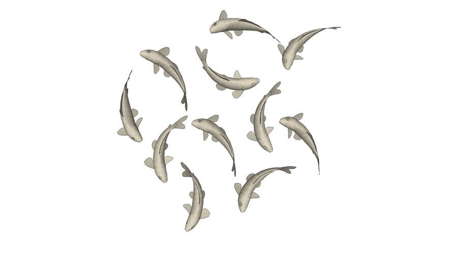 Decor cá bơi