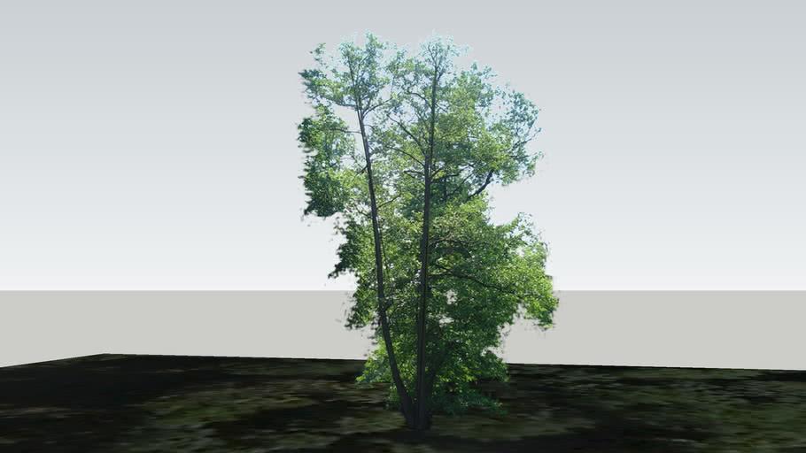 Zamok Veselí nad Moravou - Strom 51