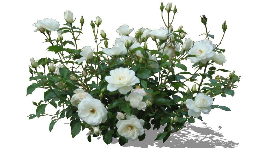 Arbusto VII (PNG)