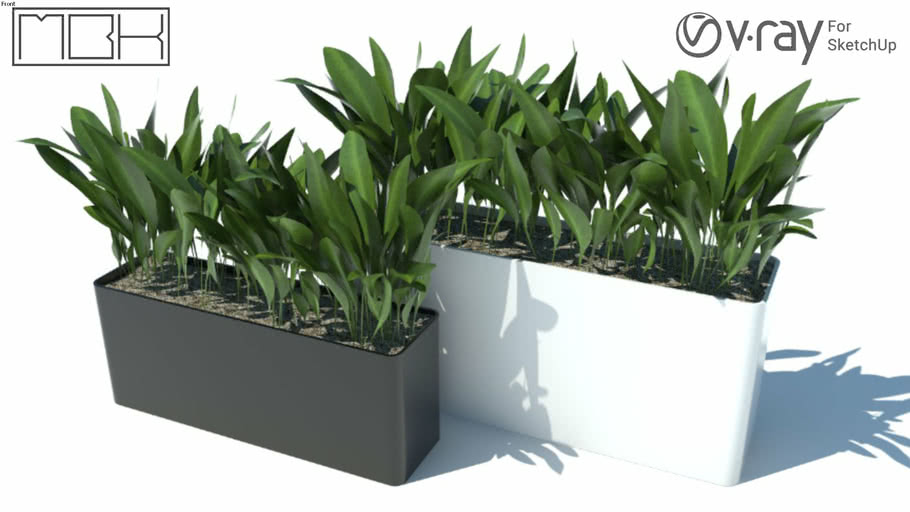 poted plants