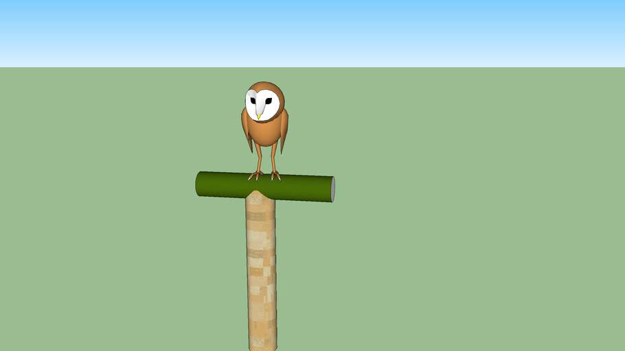 barn owl on his perch