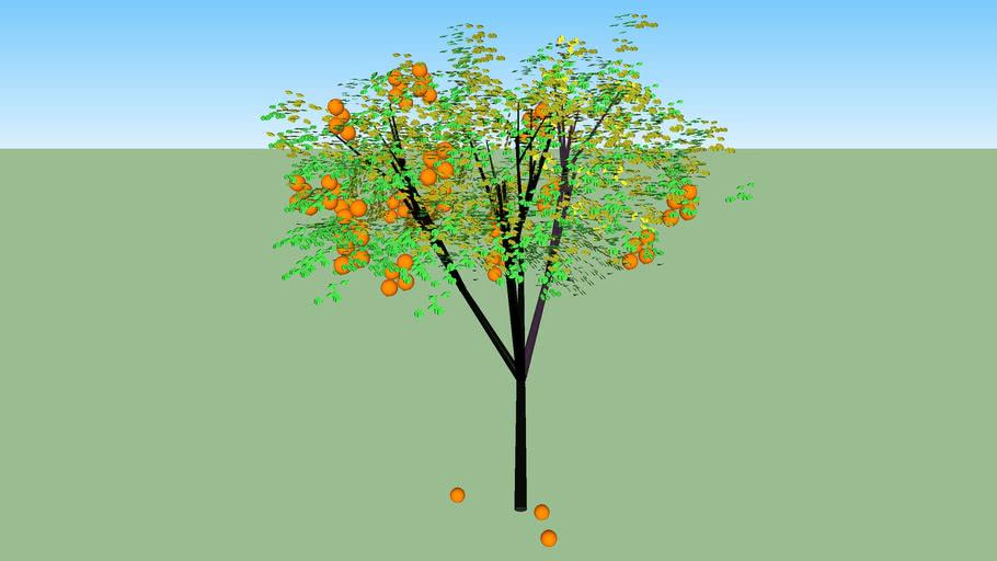 naranjo agrio