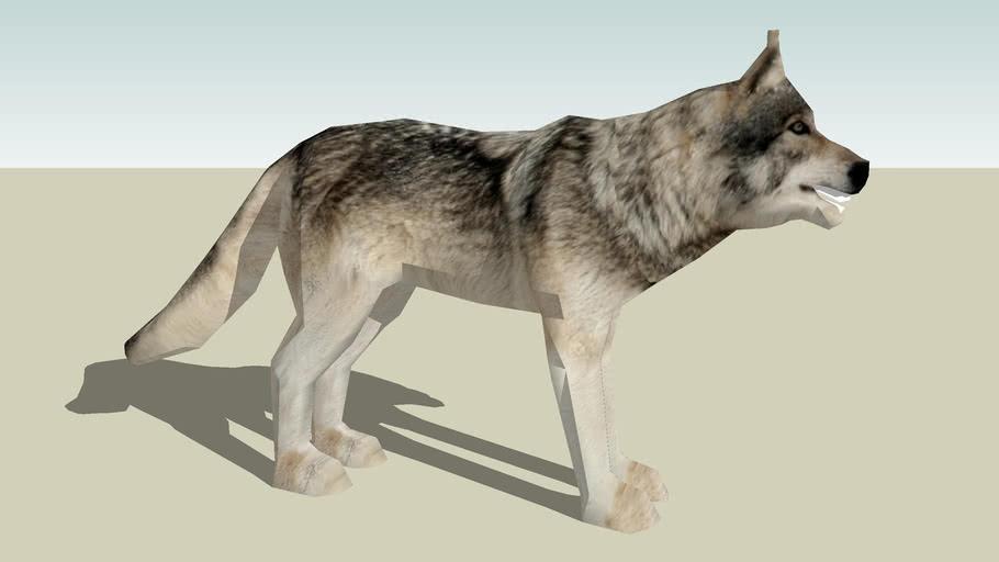Gray Wolf Photo Textured