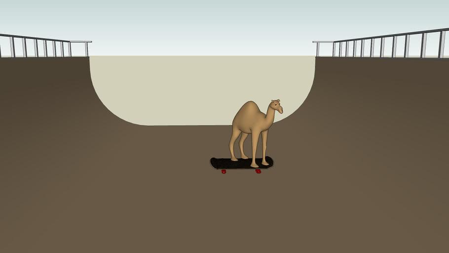 camel board