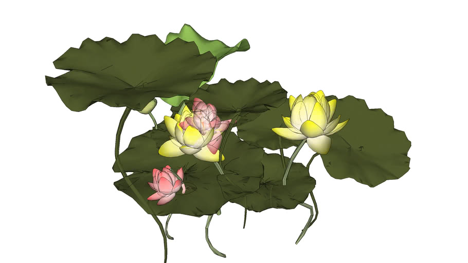 Plant_Lotus