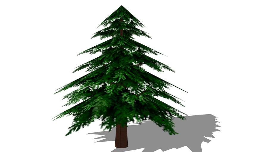 Harvest Moon Pine Tree