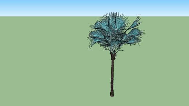 Vegetação - Palmeira Azul