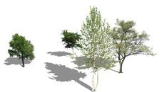 zieleń | drzewa
