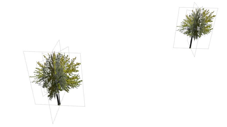 Mariehamn Airport - trees 14