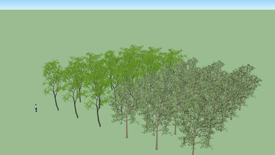 Tree Speed Test