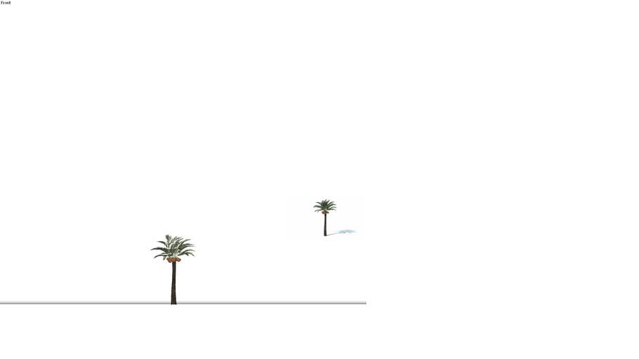 Low poly 3d tree palm (015)