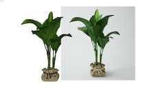 VC_Plants