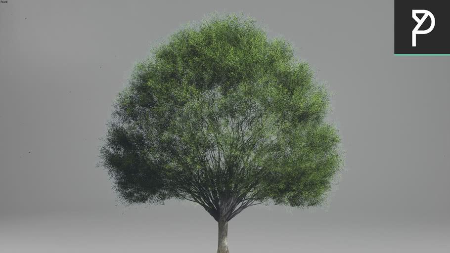 2DTrees_042 | Leaf Medium