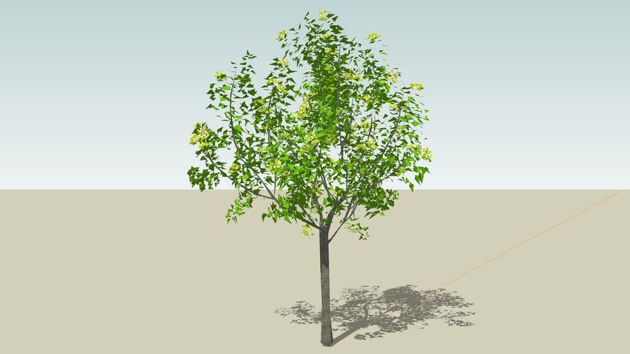 PMM tree
