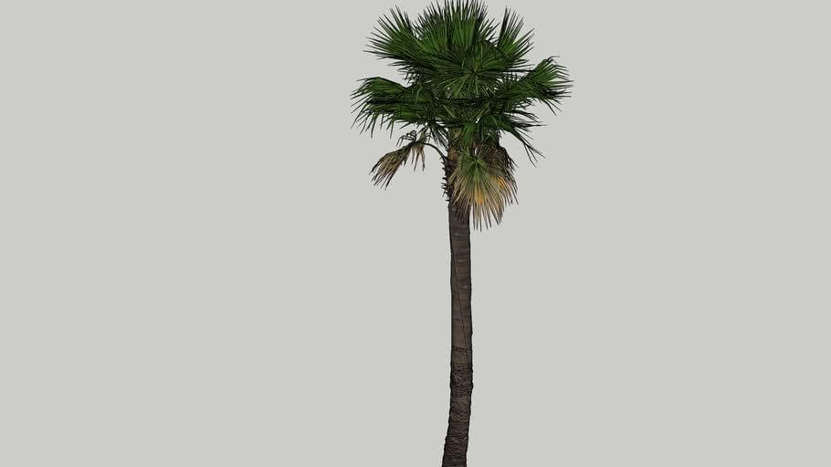 palm tree_HHD