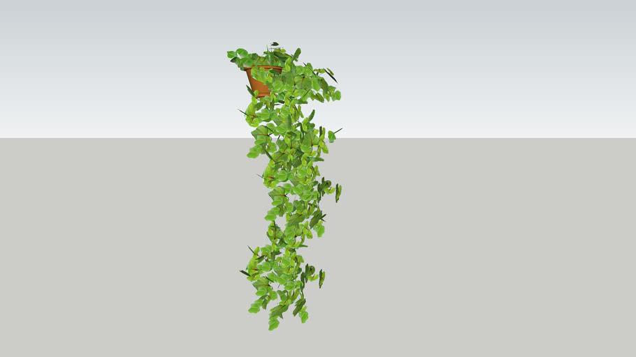 hangplant, hanging plants